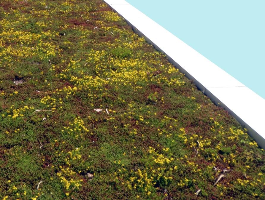 Toiture terrasse isolation et design - Toiture terrasse vegetalisee ...